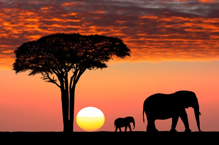 /media/post/7t4q79r/africa-cruise-safari.jpg