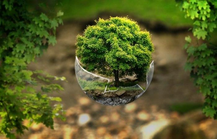 /media/post/u9hpg8s/forest-1344580_960_720-796x512.jpg