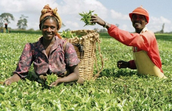 /media/post/zlstd8c/agriculture-in-africa-796x512.jpg